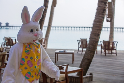 bunny (10 of 10)